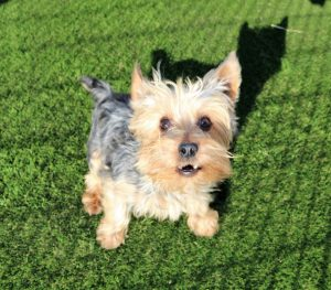 K9 Artificial Grass For Dogs