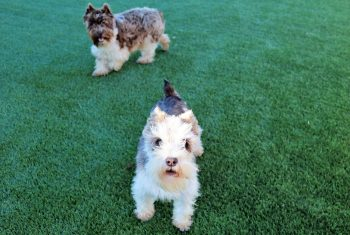 Artificial Grass for Dogs Cleveland Ohio