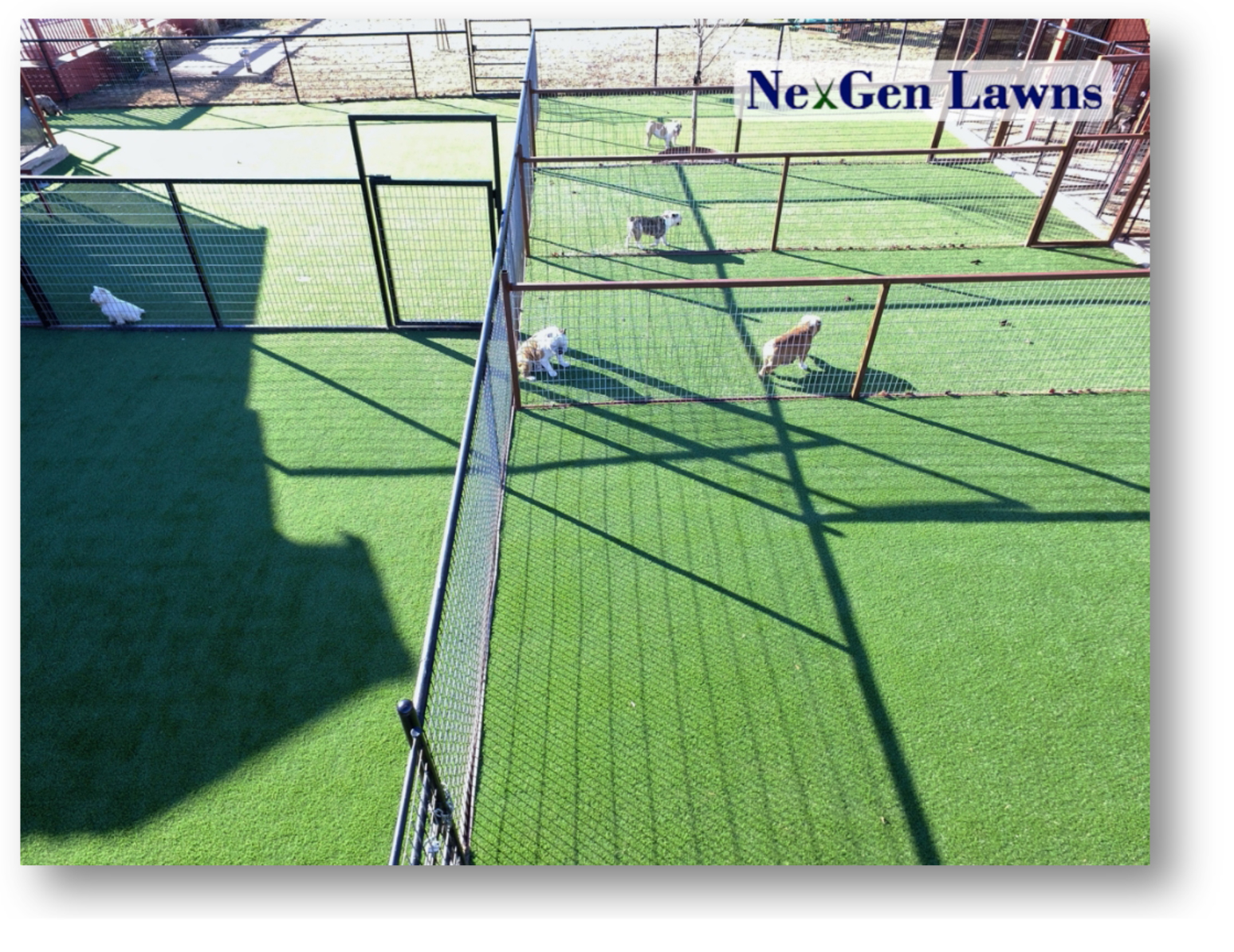 potential dog centers with kennel turf