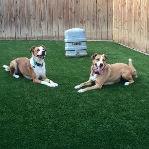 synthetic turf for dogs